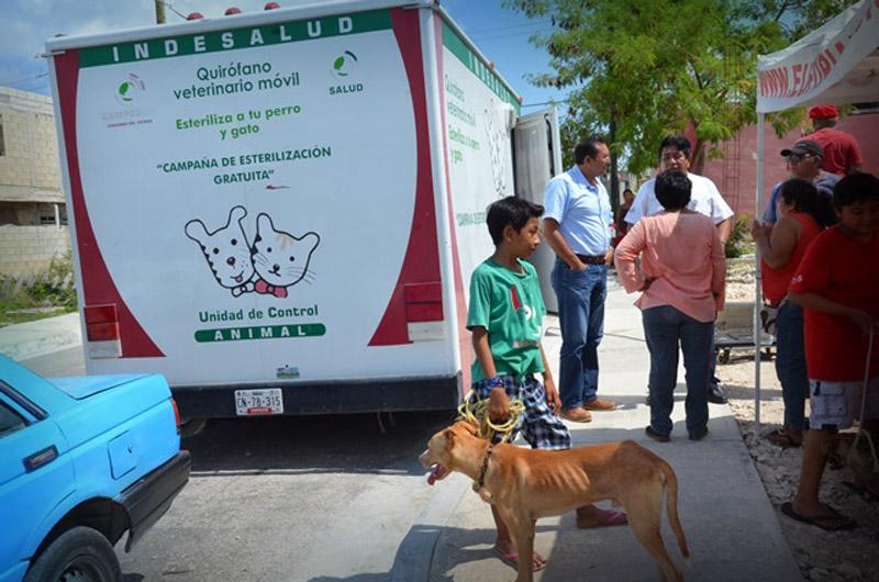 salud-esterilizacion-perros-6748