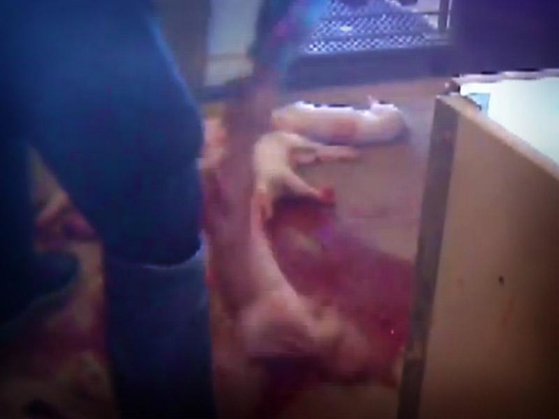 crueldad-animal-7394