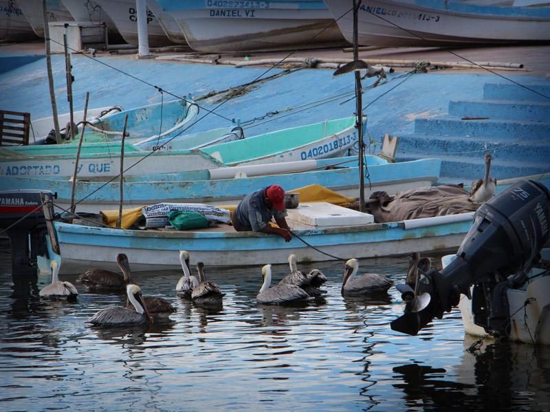 pesca-lancha-pescadores-3948
