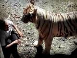 ¡BRUTAL! TIGRE BLANCO MATA A UN JOVEN EN UN ZOOLÓGICO