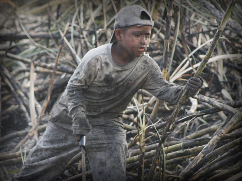 Muchos Ninos Pierden La Vida Trabajando En El Campo Activistas