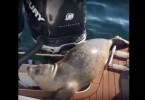 foca-lancha-64324