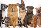 mascotas-app-76456