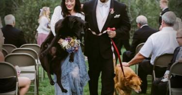 perro-boda-64532