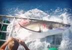 buzo-tiburon-39342